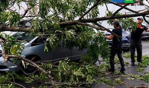 Три человека пострадали в Москве в результате сильного ветра