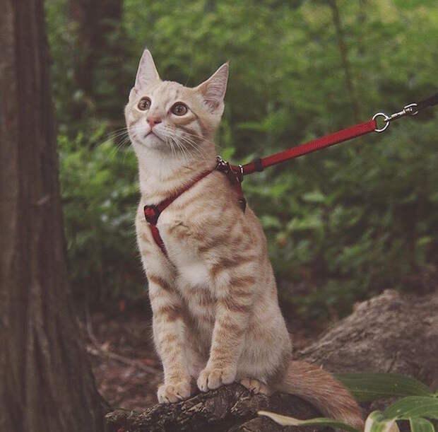 Кошки-путешественницы
