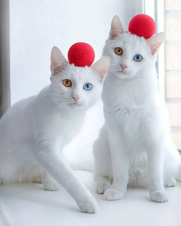 Павел из Питера завел двух необычных кошечек-сестер, теперь они популярны во всем мире