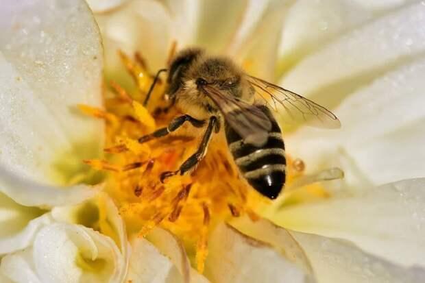 Пчеловоды Башкирии пожаловались на массовую гибель насекомых