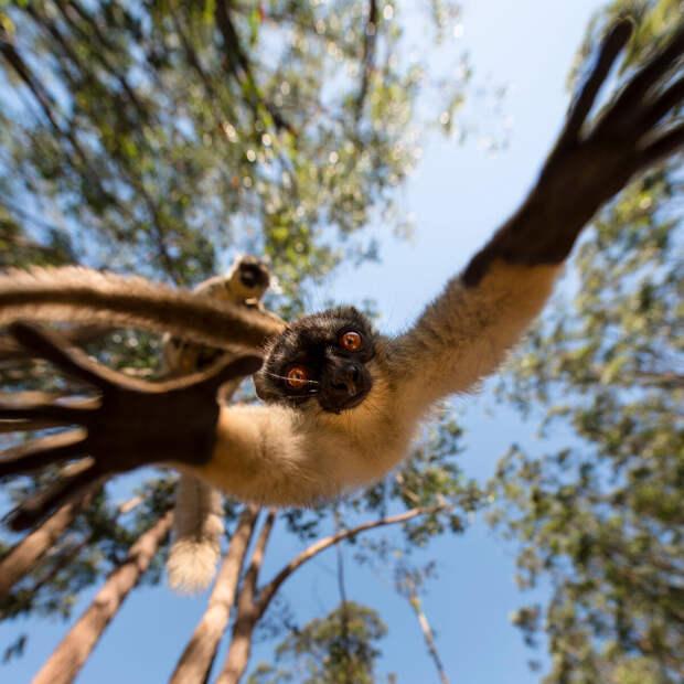 11 красивых фото дикой природы от призера 35AWARDS