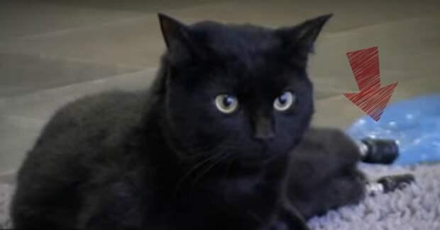 Думаете, перед вами – обычный кот? Рассмотрев его, вам захочется и плакать, и радоваться…