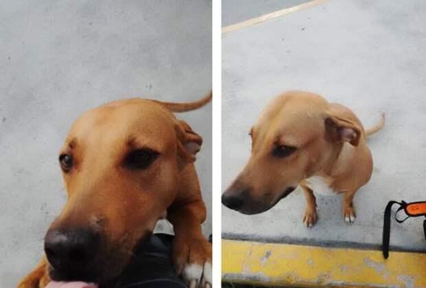 Мужчина отплатил собаке за укус лаской, приручив её. Доброта стоило ему сотни тысяч лайков