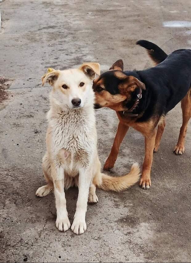 Работники промзоны в Ижевске решили пристроить живущих там собак