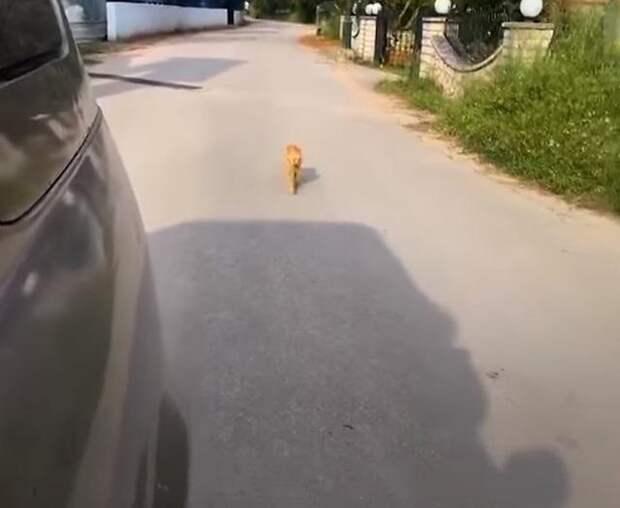 Бездомная кошка преследовала автомобиль волонтерши: она знала, что ей помогут