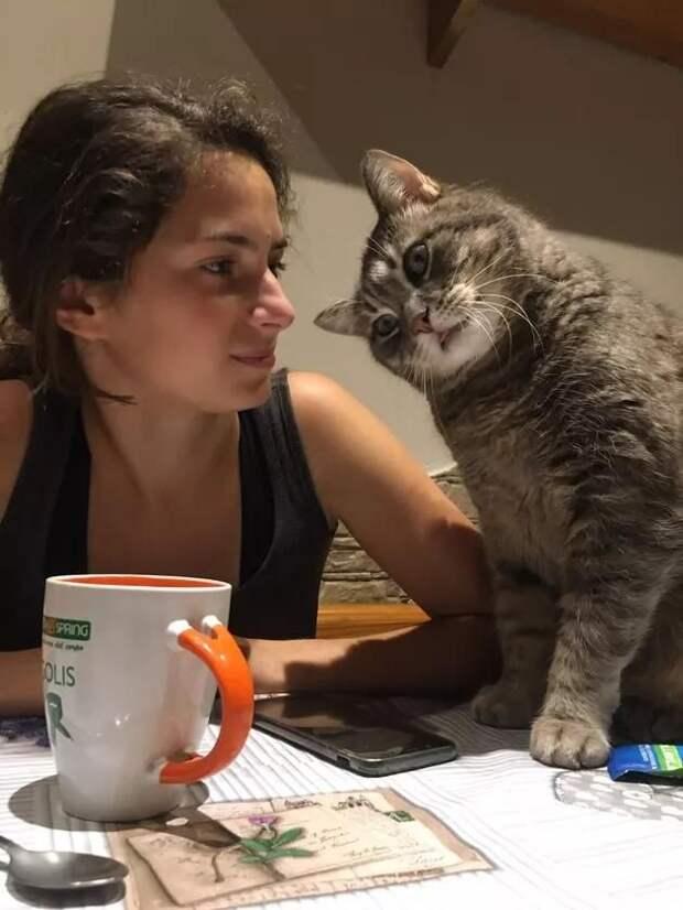 За позитивом: любуемся на фотки котиков, берущих от жизни всё