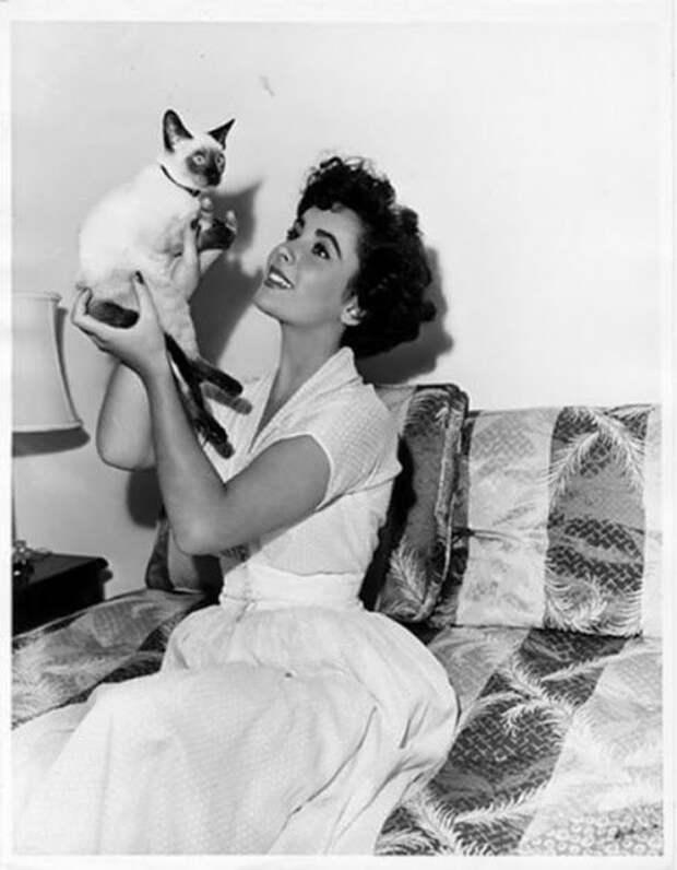 Елизабет Тейлор и ее кошками (1950-60-е)
