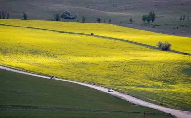 Фермеры стали сеять больше гороха и кориандра на фоне пошлин на зерно