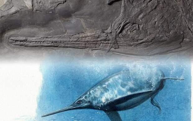 Описан крупнейший морской хищник среднего триаса