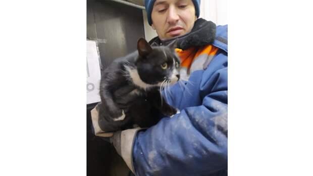 В Ульяновске спасли кота, выброшенного с мусором на свалке