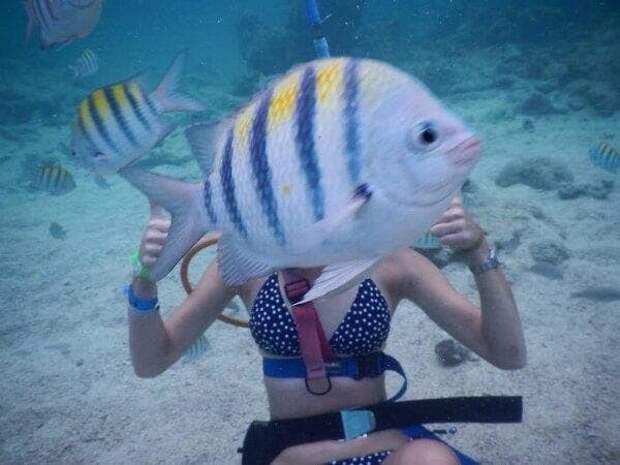 Рыбка, рыбка, где твоя улыбка? в кадре, главные герои, животные, забавно, смешно, фото, юмор