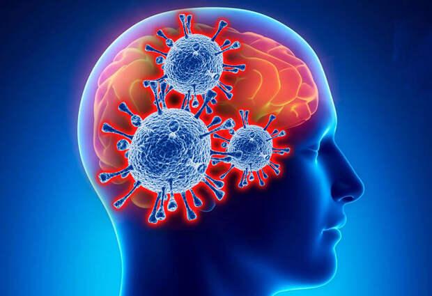 Учёные объяснили, как коронавирус проникает в мозг человека