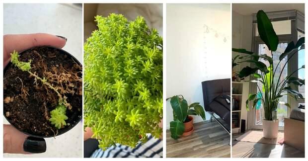 Любовь и забота преображают даже растения: 25 фото удивительных трансформаций