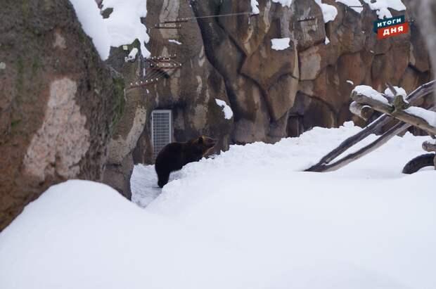 Итоги дня: весеннее пробуждение медведя в зоопарке Ижевска и новые ковидные послабления