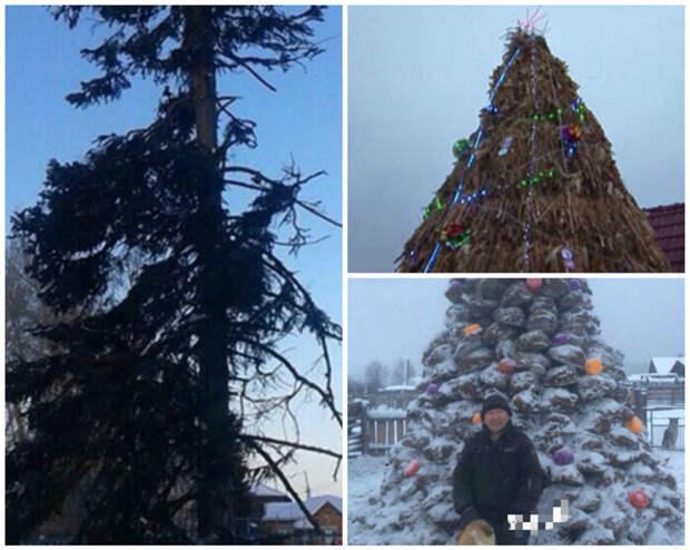Слева лысая елка в селе Колпашево, справа -народный креатив - соломенная елка и елка из кизяков. Этого добра в деревне точно хватает. весело, деревня, интересно, новый год, село, юмор