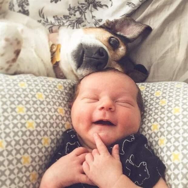 Животные, глядя на которых невозможно не улыбнуться