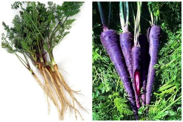 Морковь интересное, овощи, происхождение, факты