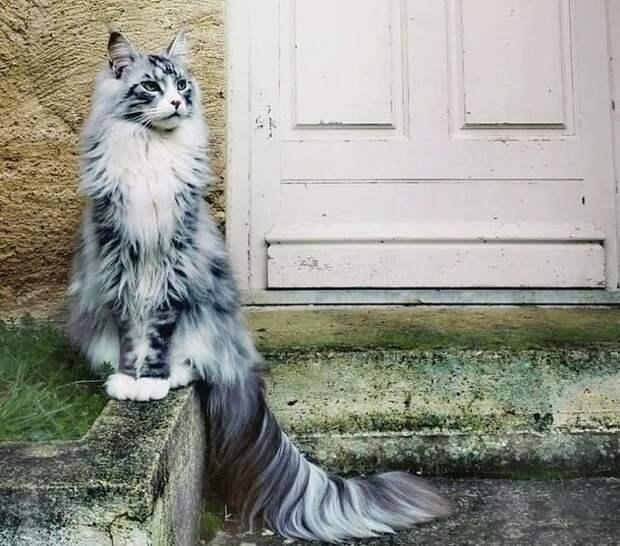 Величие и царственность гифки, коты, фото