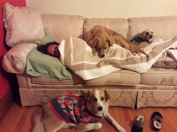 Эти 15 фото покажут что люди не заслуживают таких преданных друзей, как собаки