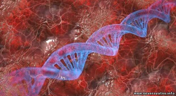 В ДНК человека нашли гены неизвестного предка