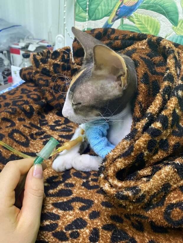 Кошку породы сфинкс выбросили на улицу не думая о том, как она будет жить без шерсти