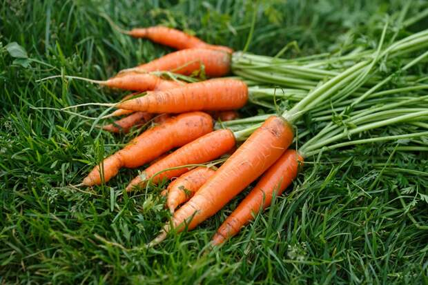 целебные свойства морковной ботвы