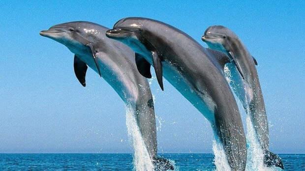 Мишустин предложил запретить вылов дельфинов и китов