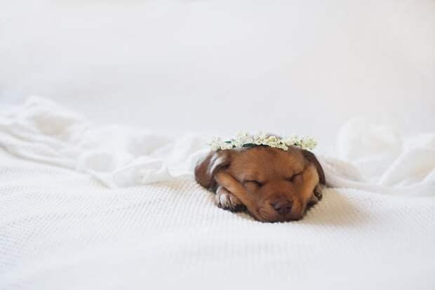 Трогательная фотосессия новорожденного щенка