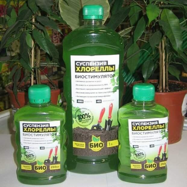 Копеечное удобрение для всех растений