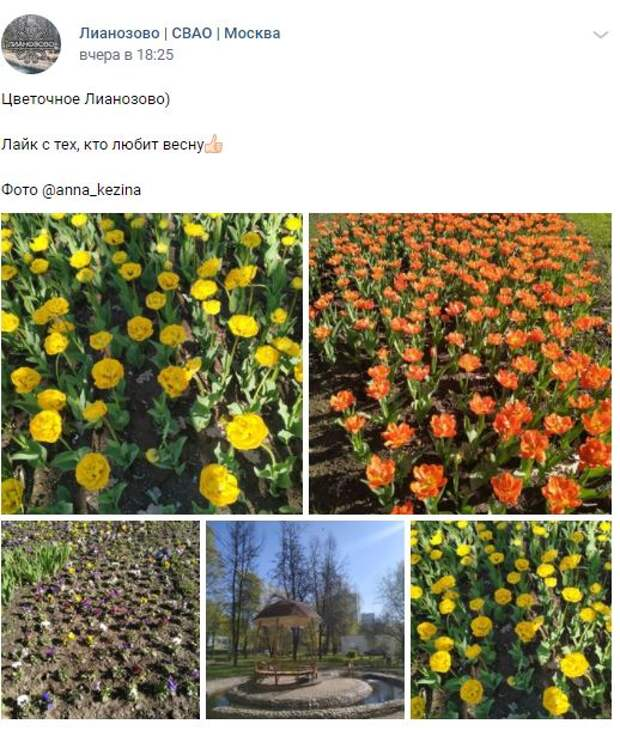 Фотокадр: прохожая сфотографировала «цветочное Лианозово»