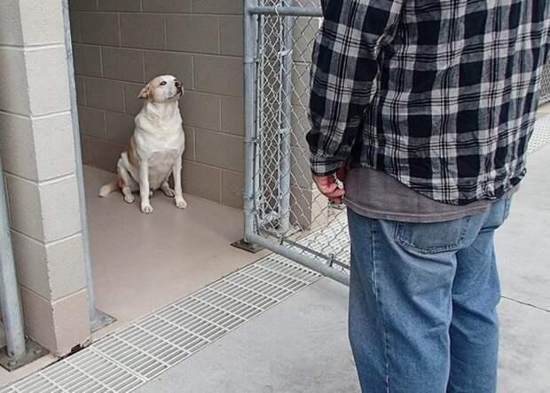 Песик из приюта заплакал, узнав стоящего перед ним человека