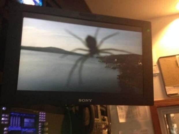 Доказательства того, что от пауков не скрыться