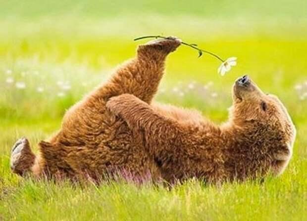 Поднимаем настроение! Весна!