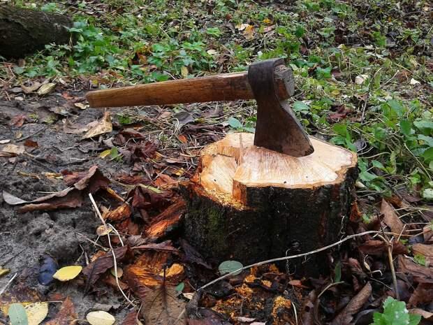 Почему нельзя убирать упавшие деревья?