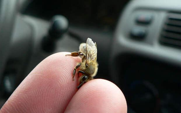 Водитель пикапа проехал 65 км в окружении тысяч пчел и выжил