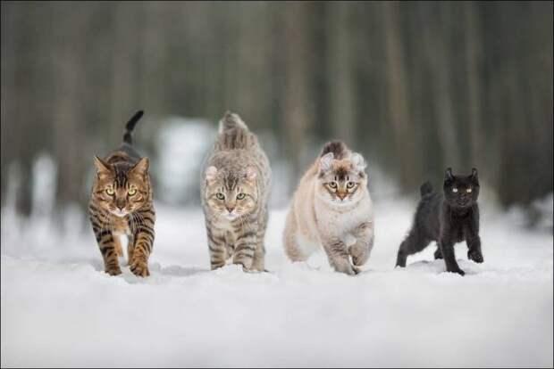 Коты идут на встречу камере