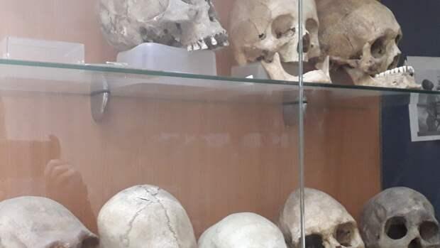 СК Всеволожска начал проверку по факту обнаружения 118 человеческих останков в мешках