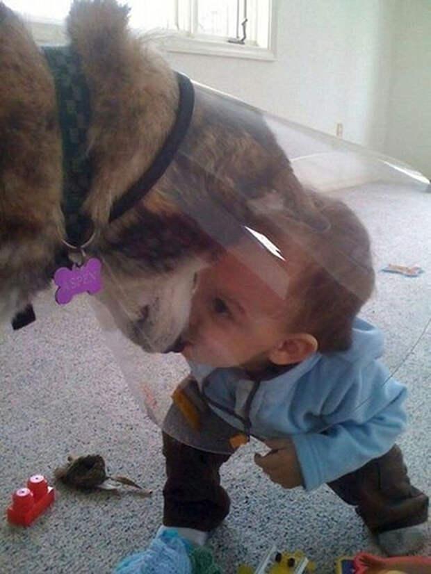 Собака грустила из-за конуса, к счастью, кто-то решил её подбодрить.
