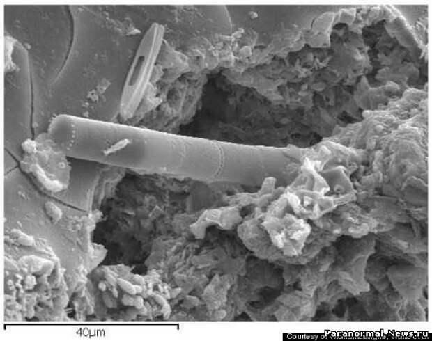 Ученые обнаружили на метеорите следы внеземной жизни
