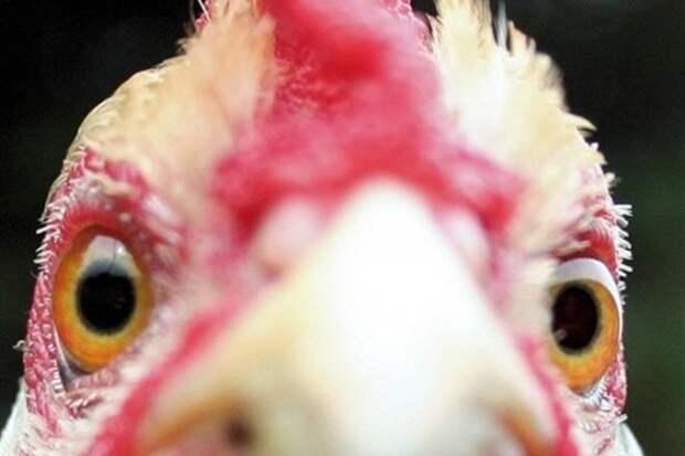 Скандал в Тюмени: покупательница забила продавщицу замороженной курицей