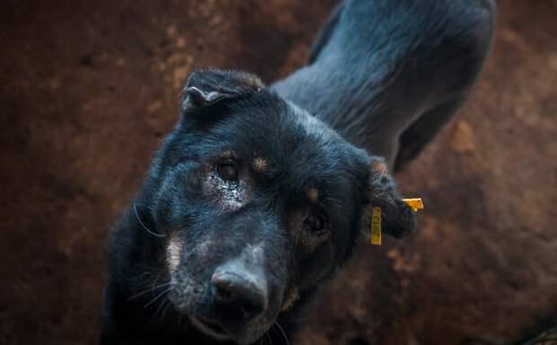 Собаки и кошки погибли на пожаре в севастопольском приюте