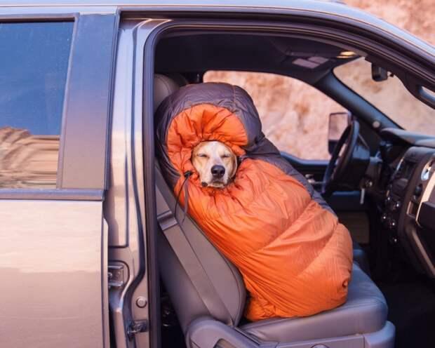 Пример настоящей дружбы между собакой и человеком