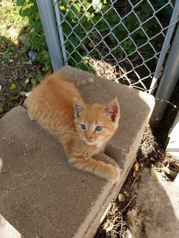 Мужчина вынес бездомному котёнку еду, но тот успел убежать. А на следующий день раздалось тихое «мяу»