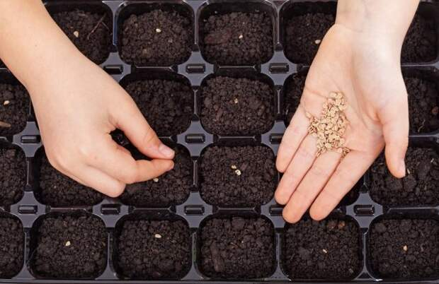 когда сажать семена на рассаду сроки таблицы