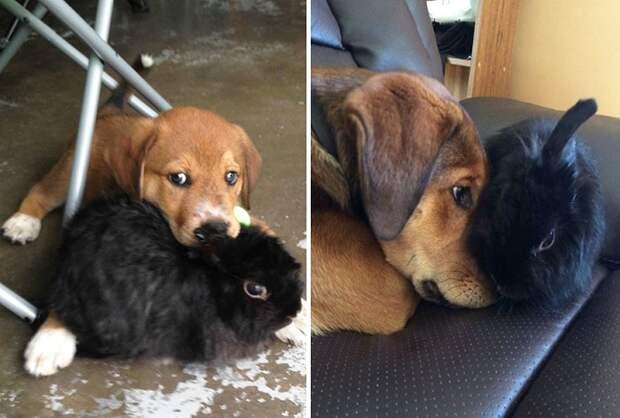 Собачка и кролик дружат с самого детства.