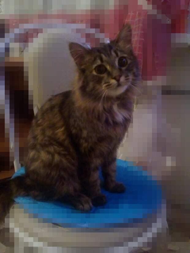 Кот царапался в двери и плакал. Девушка впустила его, а питомец тут же оккупировал диван