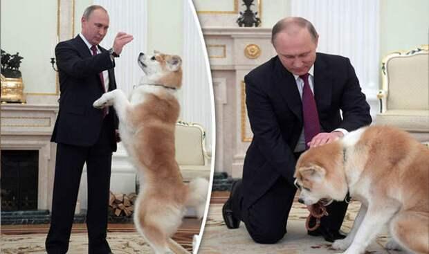 """Из-за статьи о Курильских островах японцы затребовали """"вернуть собаку Путина""""..."""