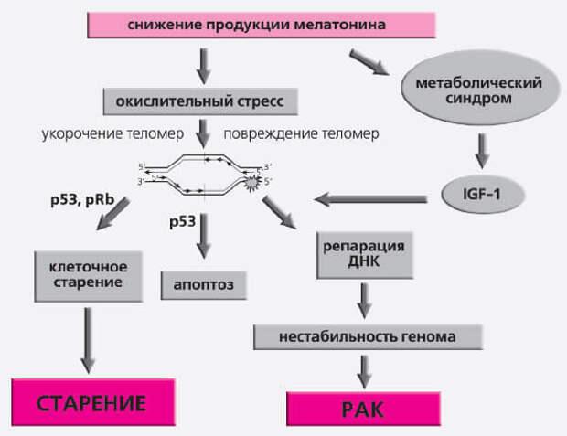 http://econet.ru/uploads/pictures/250308/content_gerontology8_1__econet_ru.jpg