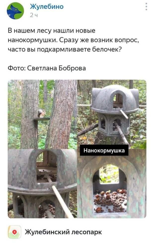 Фото дня: подозрительные кормушки в Жулебинском лесопарке