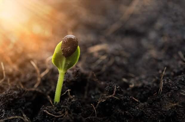 4. Подготовка семян к посеву дача, овощи, огород, растения, советы, урожай